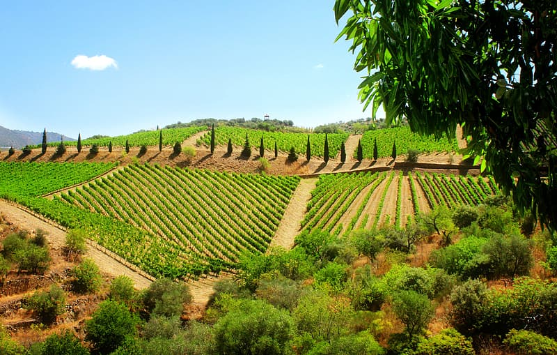 Widely considered one of the most beautiful wine producing regions anywhere, the Douro Valley is the oldest demarcated wine region in the world. This rugged natural and cultural landscape is a UNESCO World Heritage Site.